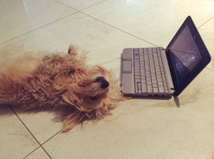 Как-называется-компьютерная-собачка-в-разных-языках-Тотошка-1.jpg