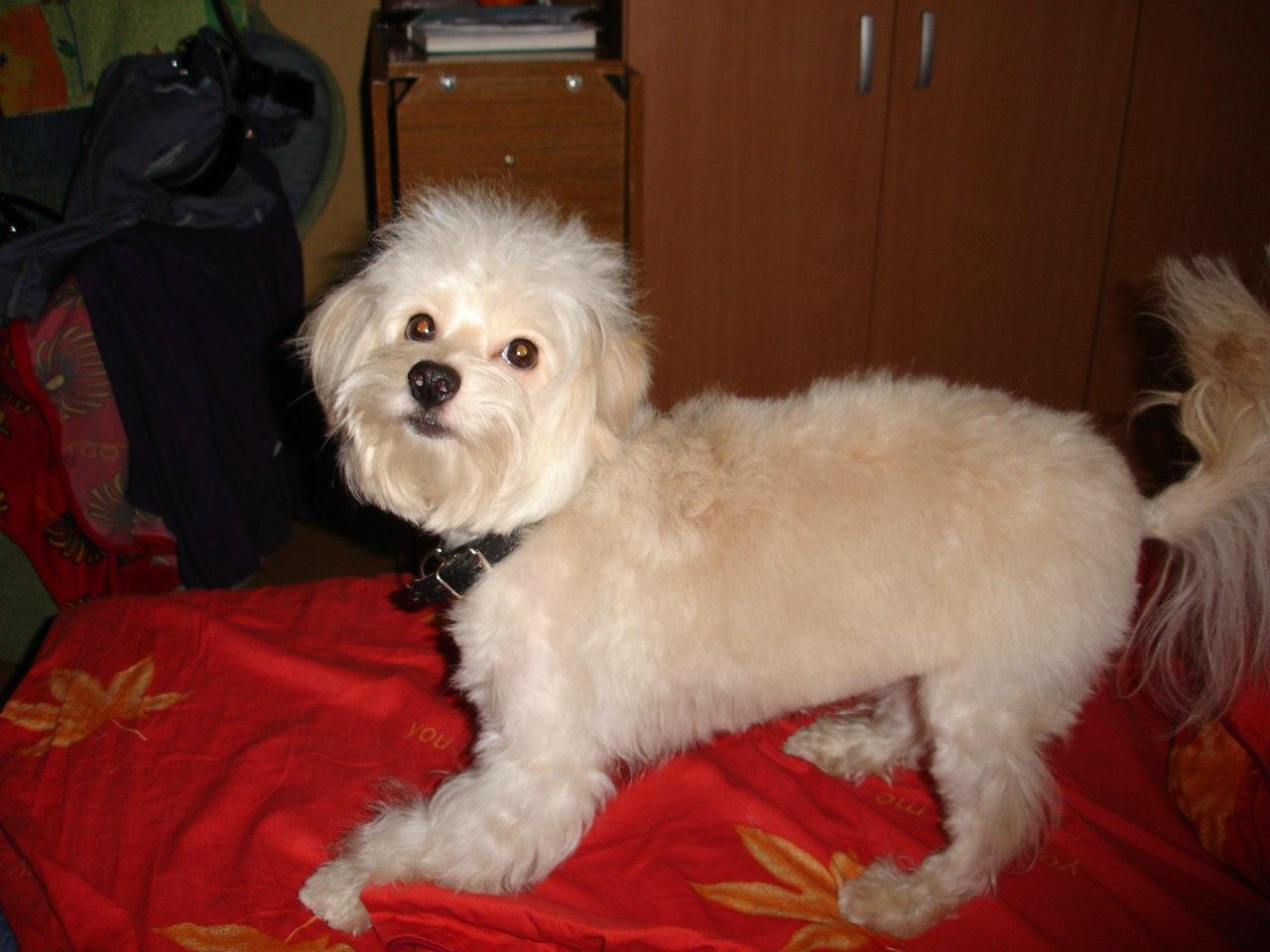 Как называется компьютерная собачка в разных языках Тотошка 5