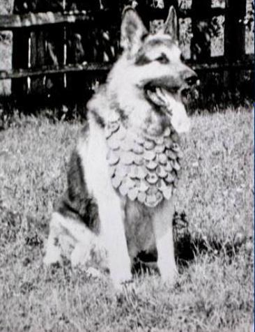 Парад победы 1945 Джульбарс