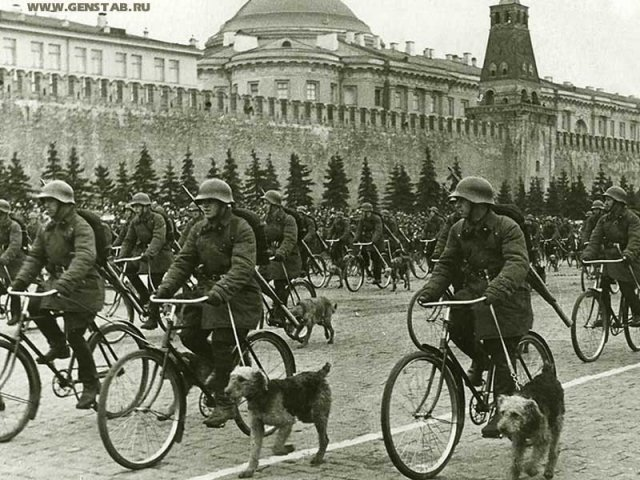 Парад победы собаки