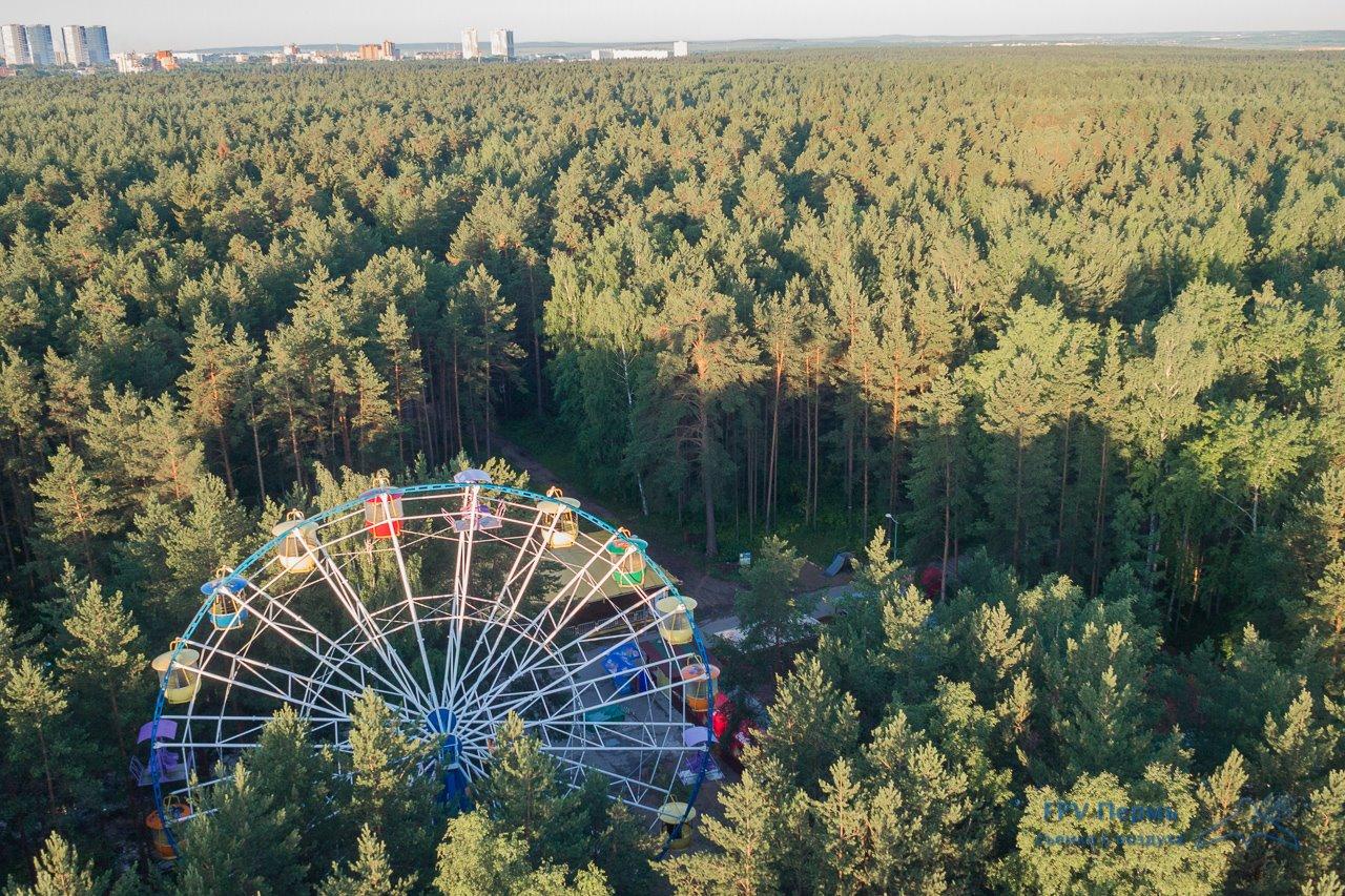 Летучий фотограф Балатовский лес