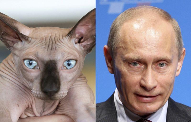 Путин в ярости 1