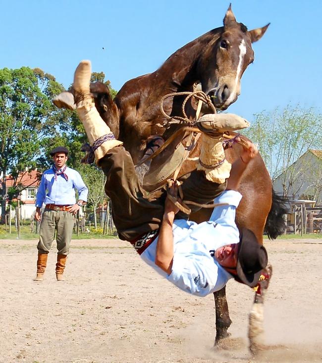 За секунду ДО лошадь
