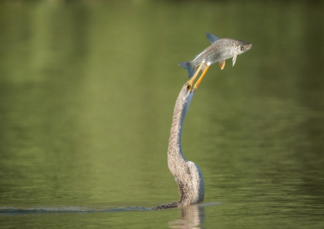 За секунду ДО рыбалка