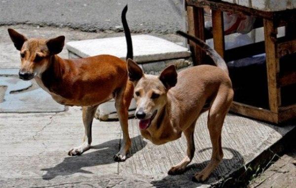 Нереальные фото кенгусобы Кьют и Бамби Филиппины