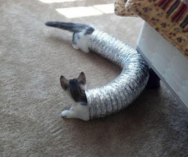Нереальные фото котогусеница