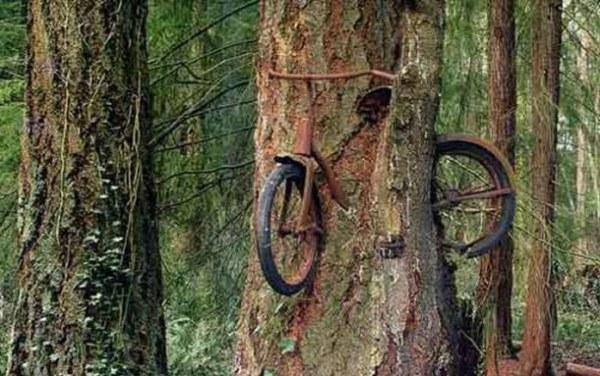 Нереальные фото велосипед