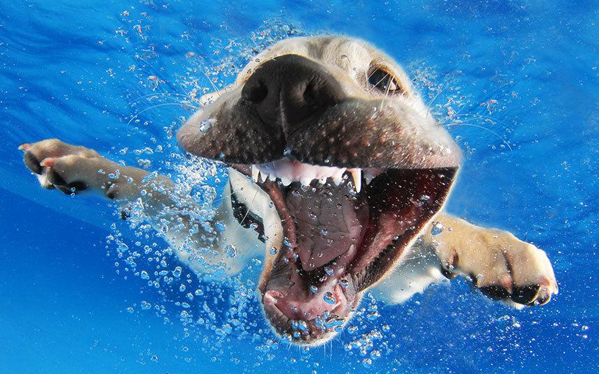 underwater-dogs-1