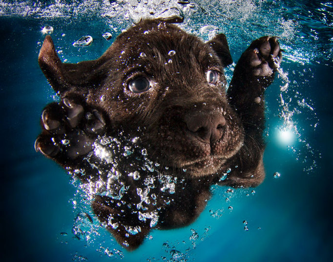 underwater-dogs-3