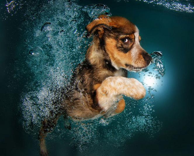underwater-dogs-8