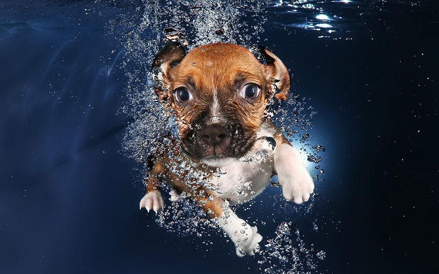 underwater-dogs-9