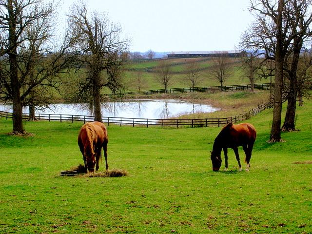 Kentucky_horse_farm