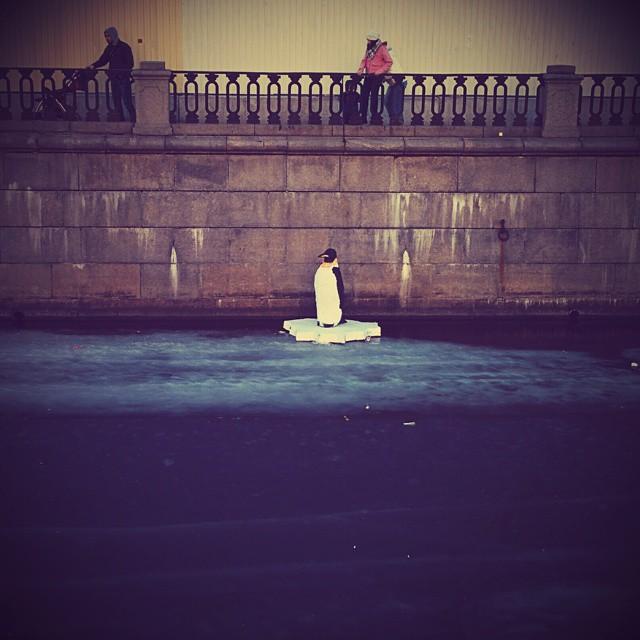Пигвин в канале Грибоедова 1