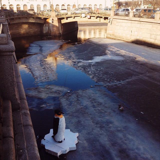 Пингвин в канале Грибоедова 2