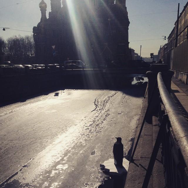 Пингвин в канале Грибоедова 4