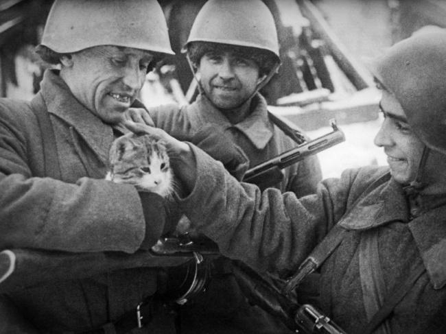 День Победы А Кричевский с кошкой в Сталинграде