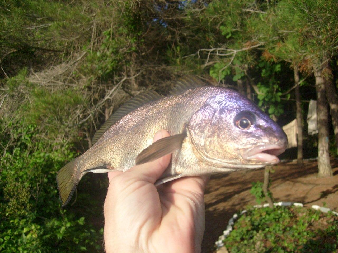 грекова щель 24 рыба