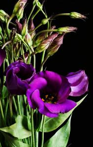 Цветы похожие на розы эустома 1