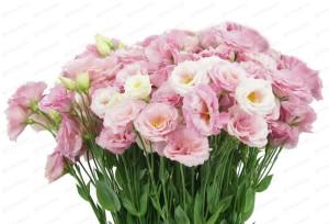 Цветы похожие на розы эустома 3