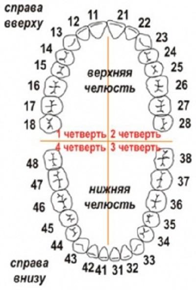 Нумерация зубов в России