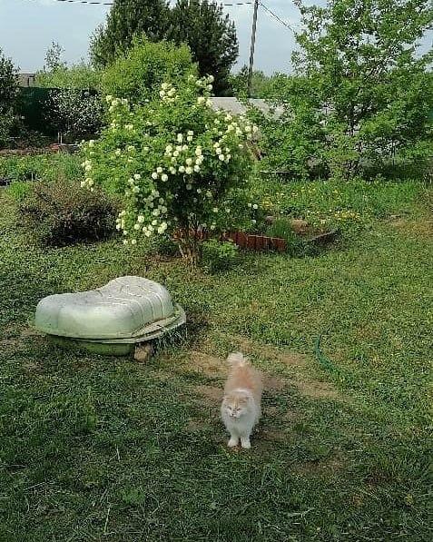 Ерепетский дубок и котик